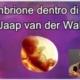 L'embrione dentro di noi - incontro online con Jaap van der Wal